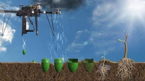 Engenheiro usa drones para semear 1 bilhão de árvores por