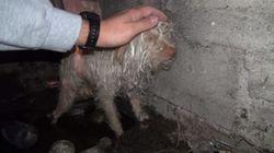 Este cachorrinho foi resgatado do esgoto. Poucas horas depois, ele se