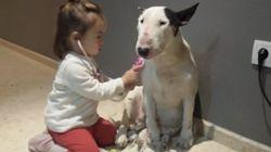 ASSISTA: Minimédica examina cachorro em vídeo que vai derreter seu