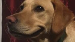 ASSISTA: Um cachorro que sabe... Sorrir!