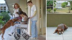 ASSISTA: Campanha pela doação de órgãos usa cachorro em comercial