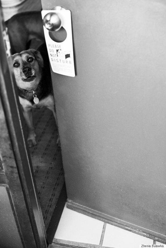 Comovente série de fotos registra a primeira e última vez que um pit bull viu o
