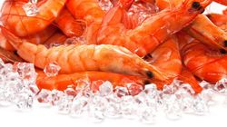 Estudo descobre que camarão congelado é nojento