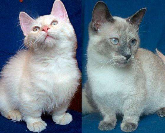 15 raças de gatos com características fora do comum   HuffPost Brasil 4f32444dfe