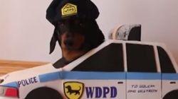 ASSISTA: A polícia dos dachshunds vai te pegar!