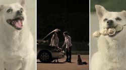 ASSISTA: Para agradecer por comida, cachorro aproxima casal em