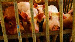 4 fatos chocantes que você precisa saber sobre a carne