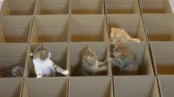 Nhóoom! Estes 9 gatinhos se divertem MUITO com caixas de