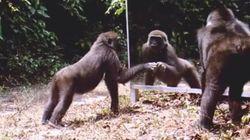 Quem é? Veja a reação de animais selvagens se olhando no espelho pela primeira