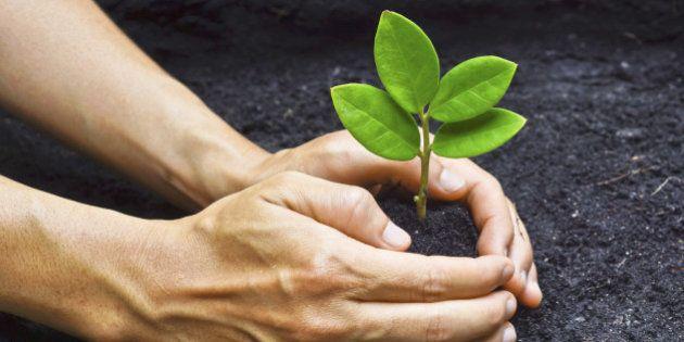Reabasteça plantando