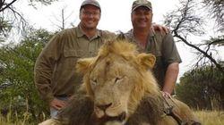 Caçadores matam 14 vezes mais animais que qualquer outro