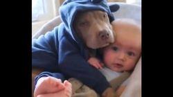 ASSISTA: Cachorro e bebezinho têm amizade que aquece o coração de qualquer