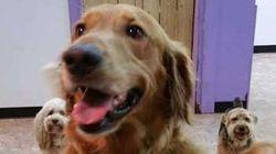 Este cachorro fugiu de casa para reencontrar os amigos em spa canino