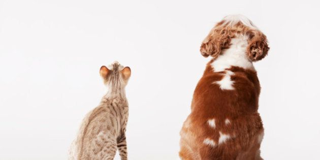 Dog and cat looking up
