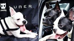 Uber lança serviço de transporte de pets no Rio e em São Paulo nesta sexta