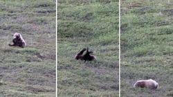 ASSISTA: Urso brincalhão se diverte sozinho e desce morro
