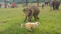 ASSISTA: Elefantinho e cachorro brincam de