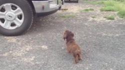 ASSISTA: Cachorro tenta proteger família do próprio reflexo em