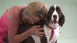 ASSISTA: Cachorro que perdeu os movimentos volta andar e dona se