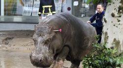 Tigres, leões e até hipopótamos escapam de zoológico após inundações na