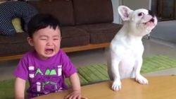 ENGOLE ESSE CHORO! Cachorro rouba comida e late para garoto ficar