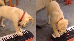 MUSICÃO! Cachorro tenta tocar teclado e fica