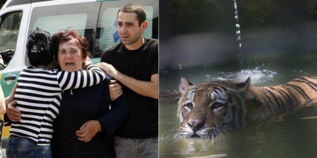 Tigre que fugiu de zoológico na Geórgia durante inundações mata uma pessoa; animal estava faminto há...