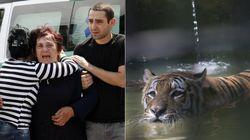 Tigre que fugiu de zoológico na Geórgia mata uma