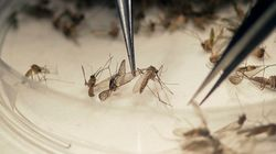 Problema global: OMS lança plano contra zika com foco no