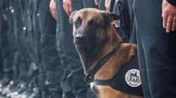#JeSuisChien: Morre cão policial em ação contra