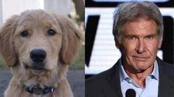 Este cachorro se parece com o Harrison