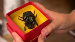 ASSISTA: Bastante mistério e clima sinistro no 1º trailer de 'O Escaravelho do