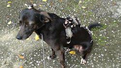 ASSISTA: Cachorrinha brasileira 'adota' filhotes de gambá