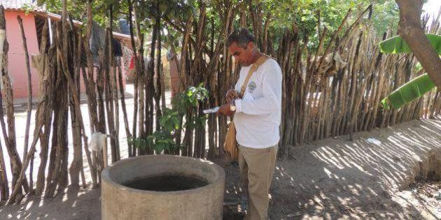 Como Água Branca, cidade no interior do Piauí, se livrou do mosquito da dengue e do