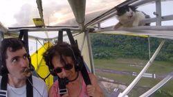 SOCOOORRO! Piloto não percebe e gato fica preso em asa de ultraleve durante