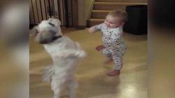 ASSISTA: Bebezinho se diverte MUITO imitando 'catioro' maluco por