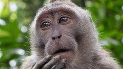 Sexta extinção em massa já começou, alertam