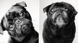 FOTOS: Filhotes e idosos. Um lindo ensaio registra 'antes e depois' dos