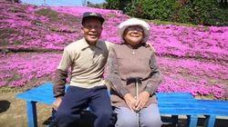 Muito amor! Velhinho japonês planta milhares de flores para esposa