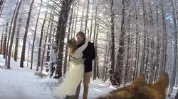 ASSISTA: Casal instala câmera GoPro em cachorro e animal registra