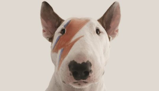 'Um Cão Chamado Jimmy': Bull terrier é estrela em ilustrações de