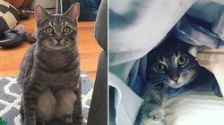 Conheça Wilbur, o gatinho que senta como um ser