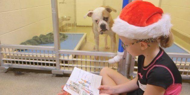 Crianças leem para cachorros traumatizados à espera de
