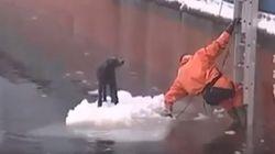 ASSISTA: Pescador salva cachorro que estava preso em gelo na