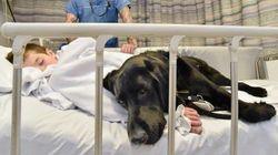Quanto amor! Cachorro ajuda e acompanha garoto autista em tudo, até no