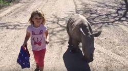 ASSISTA: Garotinha e filhote de rinoceronte andam lado a lado em santuário animal