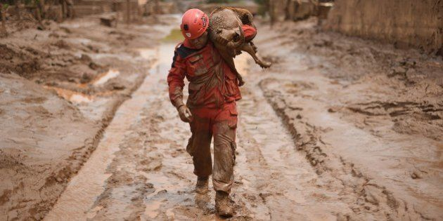 A fireman rescues in Paracatu de Baixo, Minas Gerais, Brazil on November 9, 2015 a dog that was trapped...