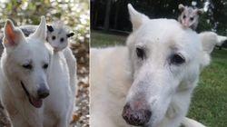 ASSISTA: Cachorro adota e cria filhote de
