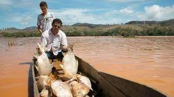 Lama atinge região de desova de tartarugas e mata 11 milhões de