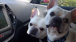 ASSISTA: 'Vamos ao parque?' Dois cachorrinhos ficam MUITO felizes ao ouvir esta